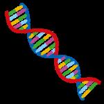 親の離婚が遺伝する確率は?浮気症は遺伝子で決まってる?